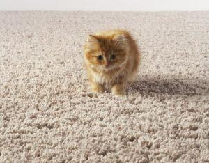 Кошка на ковре