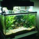 Чистка аквариума для создания благоприятных условий